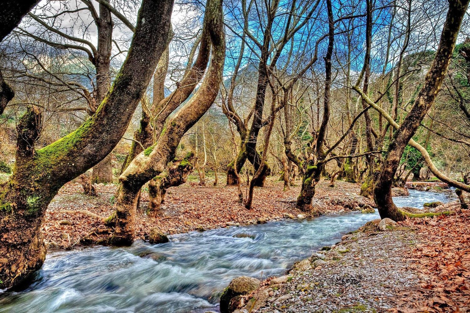 a_forest_and_river_in_kalavryta